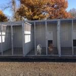 Boxes des chiens côté refuge