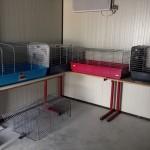 Intérieur de la pièce des chatons de la chatterie du refuge ASA